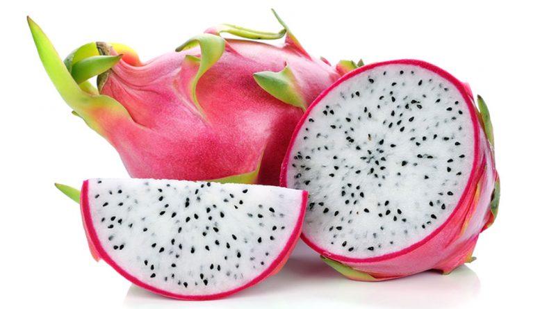 Ejder Meyvesi Pitaya Yatırımı
