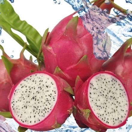 Ejder Meyvesi Pitaya için Su