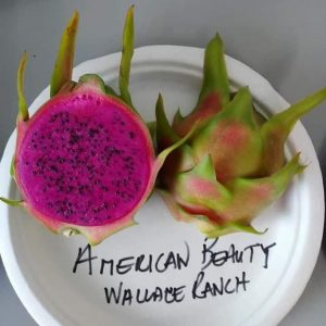 Ejder Meyvesi Pitaya American Beauty