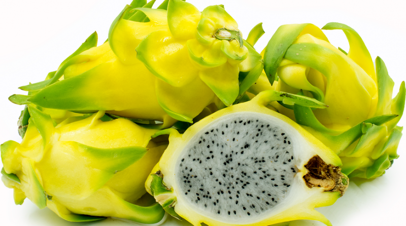 Pitaya Golden Yellow