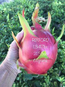 Ejder Meyvesi Pitaya Rixford