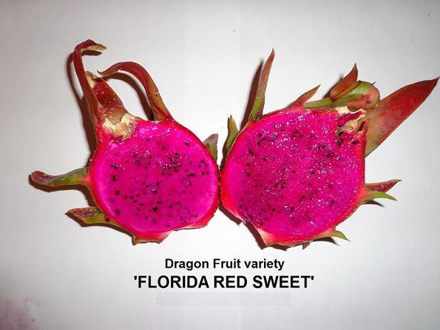 Ejder Meyvesi Pitaya Florida Red Sweet
